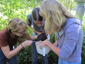 Searching for MacroInvertebrates